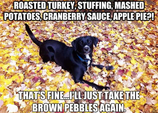 dog thanksgiving turkey stuffing ill take the brown pebbles again