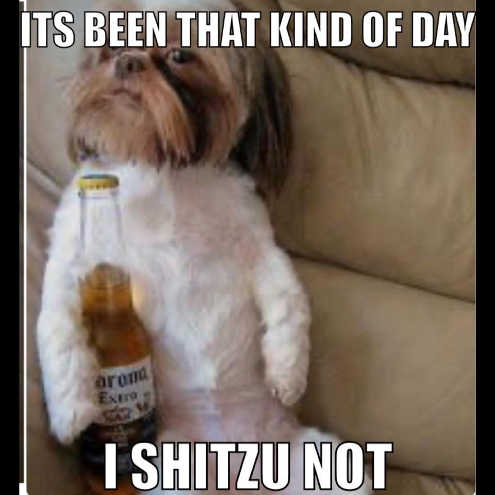 message its been that kind of day i shitzu not corona extra beer