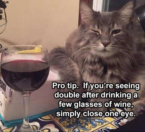 cat wine pro tip if seeing double close one eye