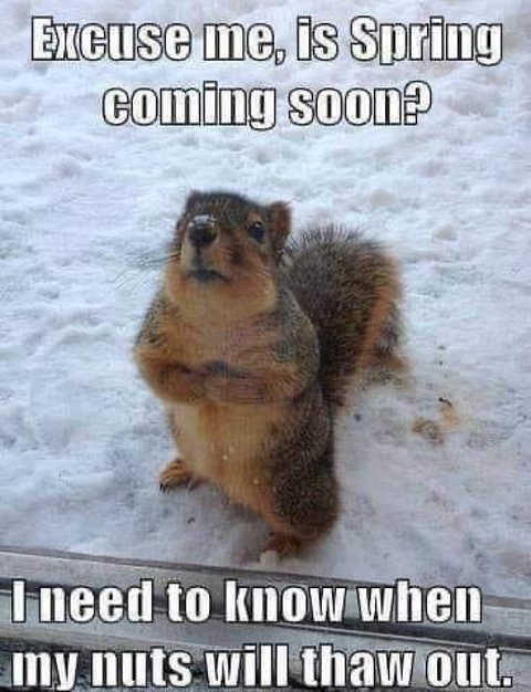 is spring coming soon up will thaw out squirrel