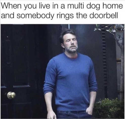 ben eyeroll when you live in multi dog house someone rings doorbell