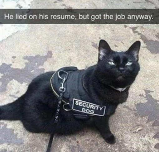 black cat security dog lied on resume got job