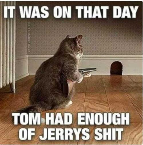 cat gun on that day tom had enough jerrys shit
