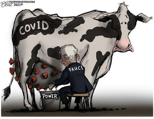 dr fauci milking cow covid power