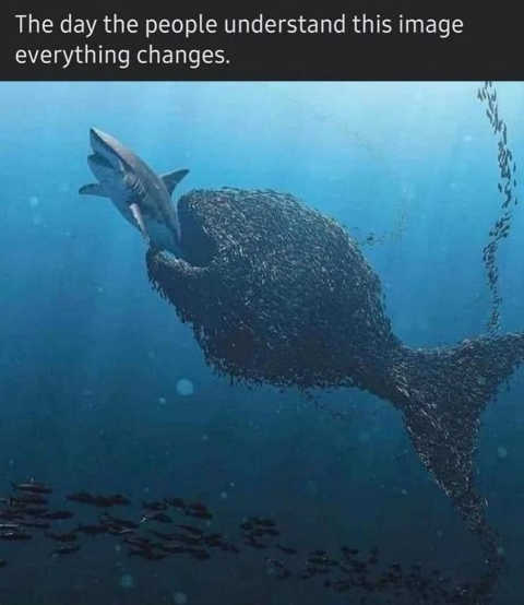 message day people understand image change little fish eating shark