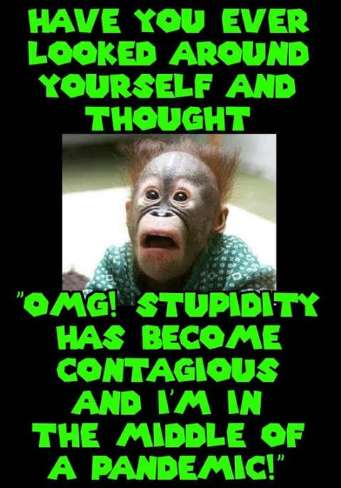 monkey stupidity contagious and in middle of pandemic