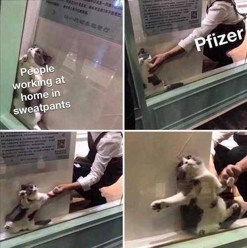 cat people at home sweatpants pfizer