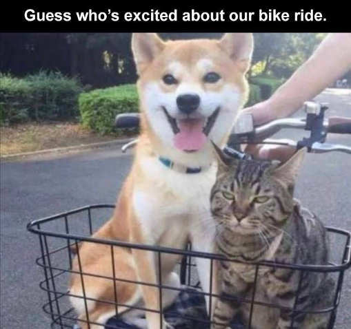 dog cat guess whos excited about bike rid