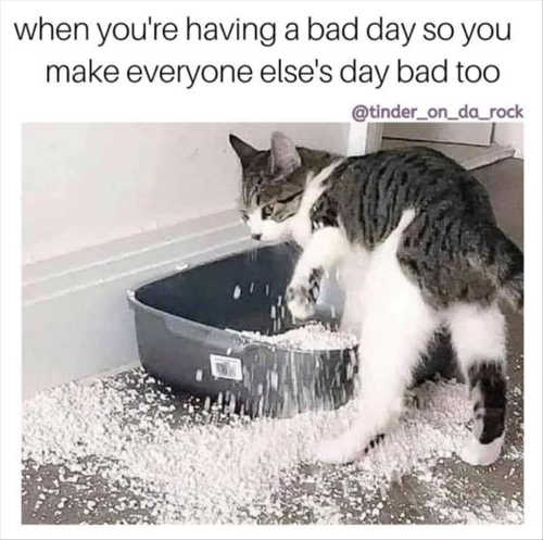 cat litter box when having bad day want others to same