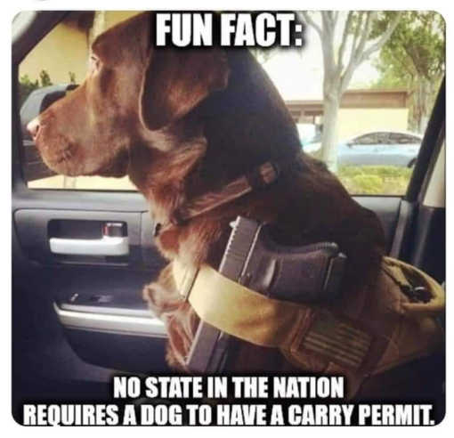 fun fact dog gun no state requires carry permit