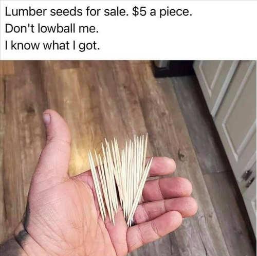 toothpick lumber seeds 5 dollars