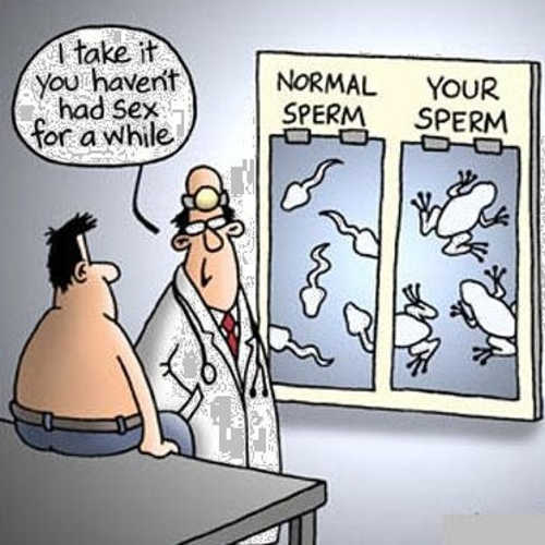 tadpoles normal sperm yours frogs doctor