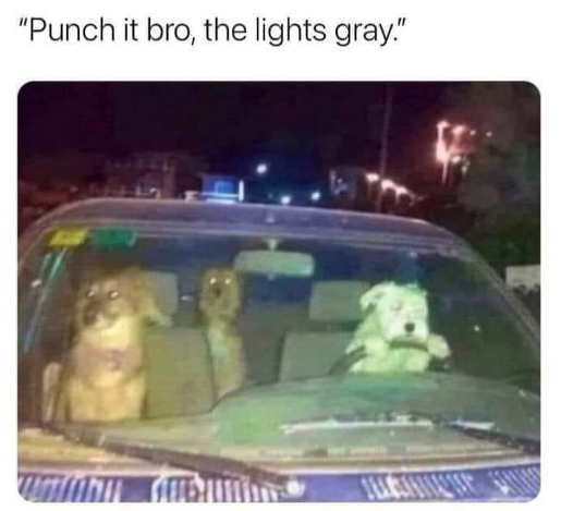 dogs punch it light is gray car
