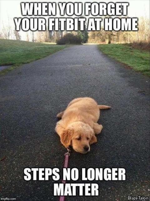 forget fitbit steps no longer matter dog lying down