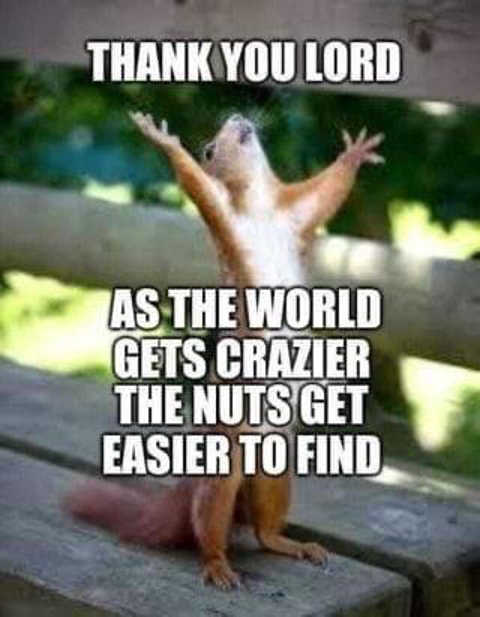 squirrel thank you lord as world gets crazier nuts easier to find