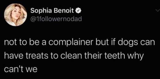 tweet sophia benoit complainer dogs have treats clean teeth