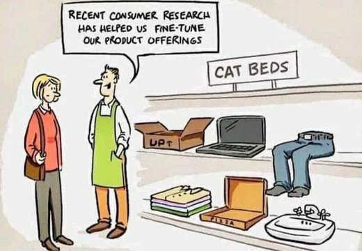research cat beds lap computer box sink clothes