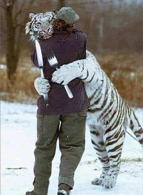 tiger hug person knife fork