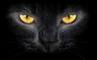Gato-Negro-de-Ojos-Amarillos_Fondos-de-Pantalla-de-Gatos