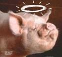 o_porco_passado_a_limpo