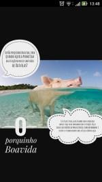 porco6