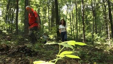 zelena patrola film4