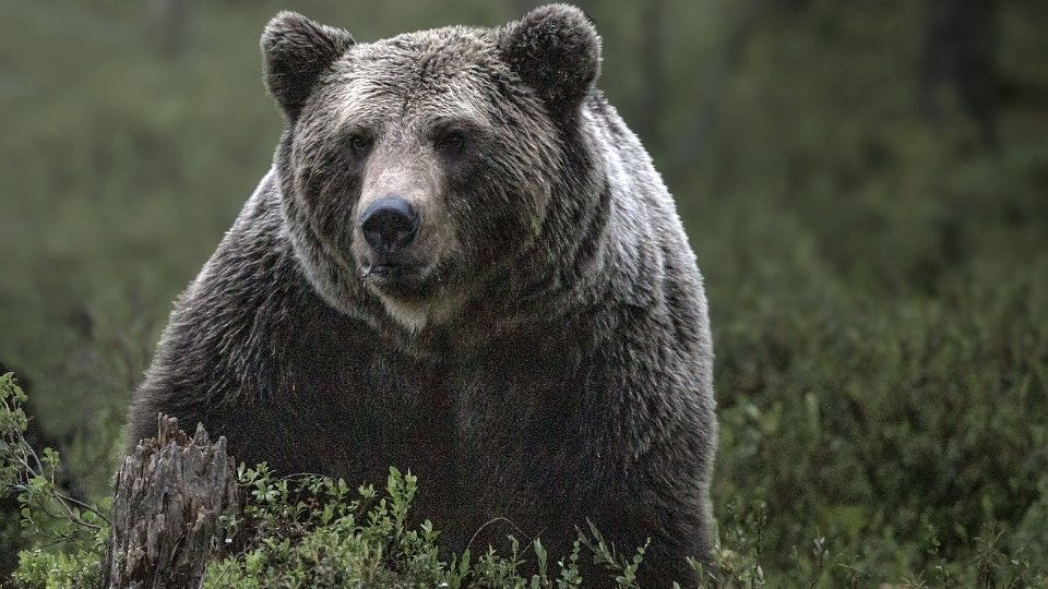 Medved trčao ulicom u Banjaluci (VIDEO)