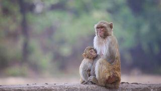 Beogradski zoološki vrt obeležio 85 godina postojanja, najavljena obnova kaveza za majmune