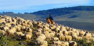 Los políticos argentinos y la sociedad, una pelea entre pastores y ovejas