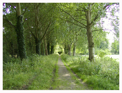 Ank Alley of trees