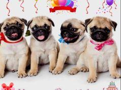 HAPPY BIRTHDAY AMY MORENO