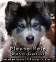 Save Dassi