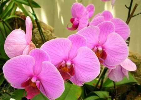 US Botanic Garden orchid