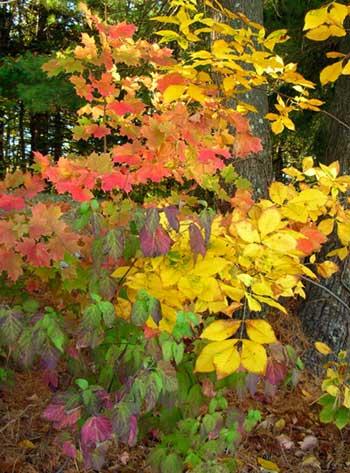 Fall foliage. Close-up