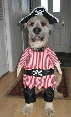 Why pets hate Halloween