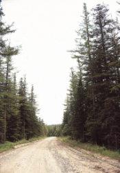 dirtroad-trees.jpg