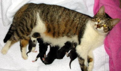 Mom cat, five newborn kittens
