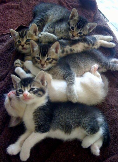 kittie pile