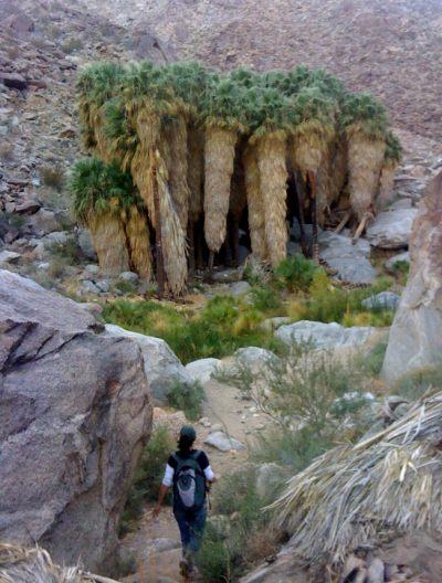 Palm Oasis, Anza-Borrego Desert State Park