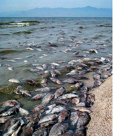 Salton Sea fish kill