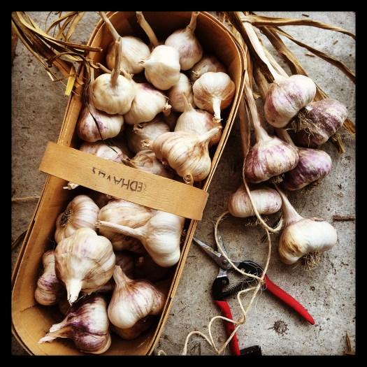 garlic basket polka dot hen produce