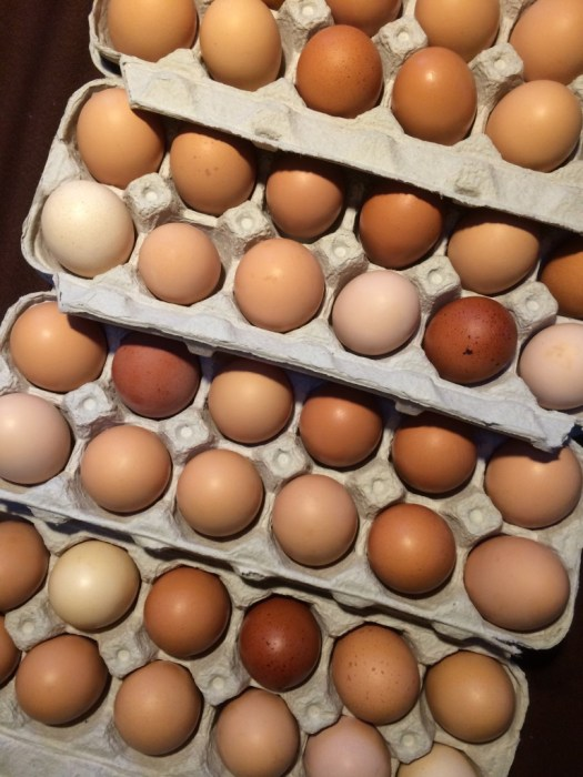 fresh eggs wiarton