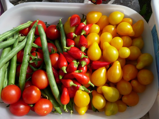 Tomatoes, peppers and green beans freshly picked