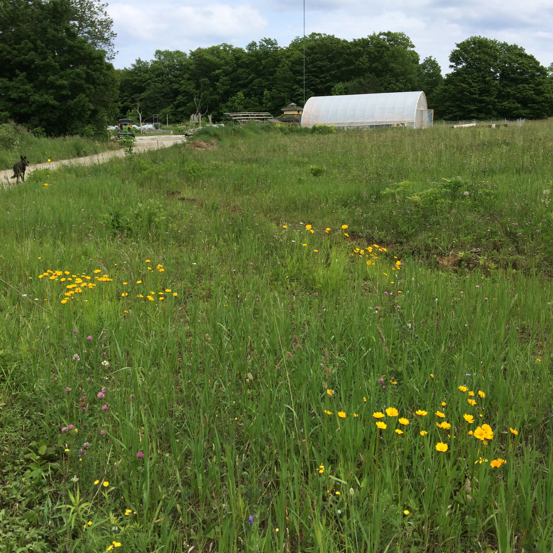 hoop house and meadow