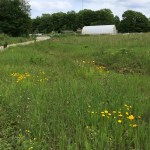 hoop house and meadow