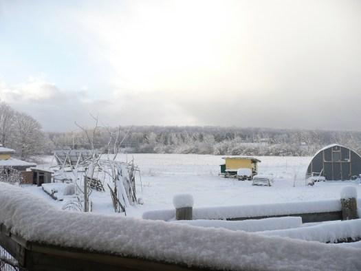 Snowfall on polka dot hen produce homestead bruce peninsula