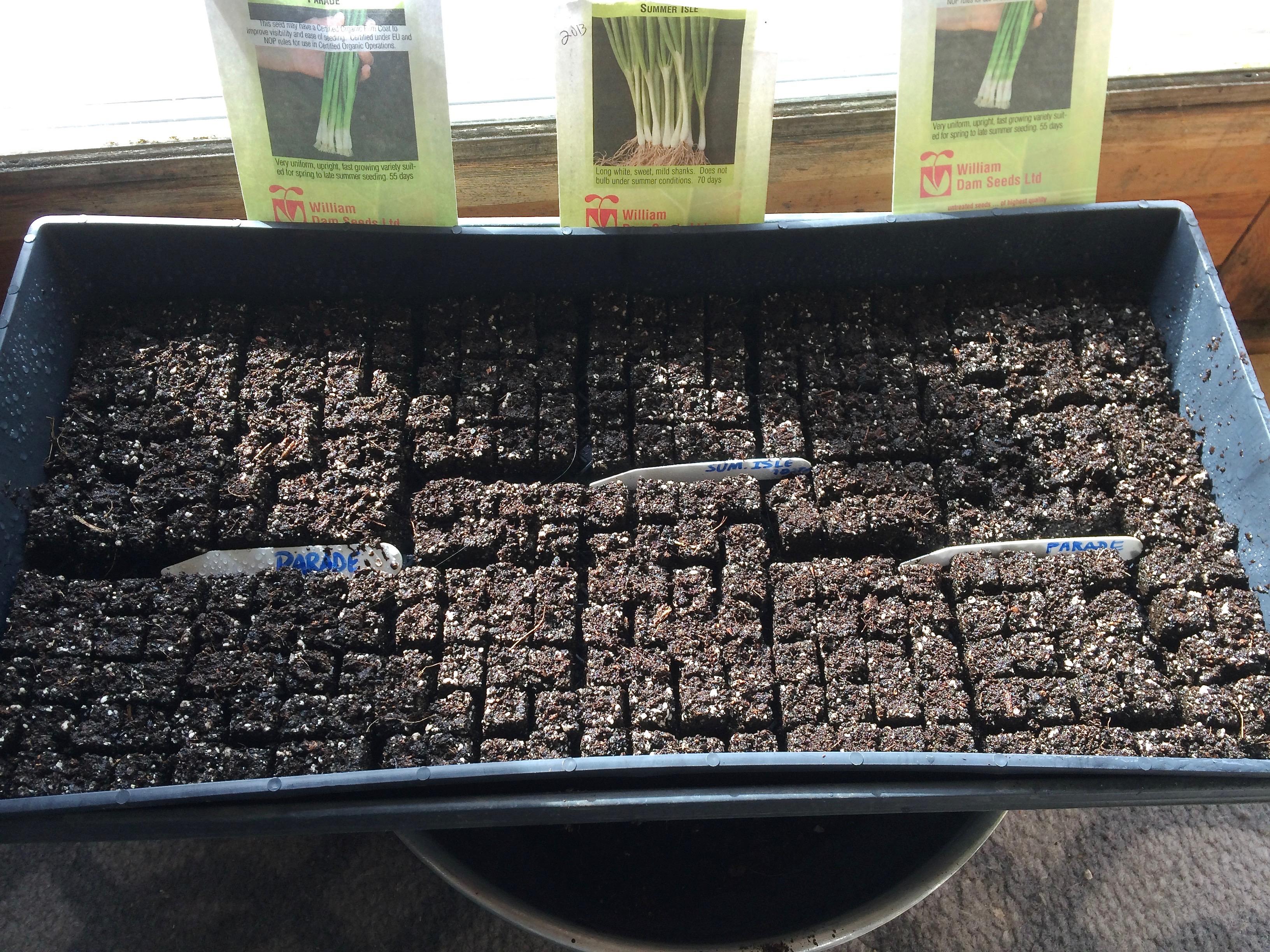 soil block tray