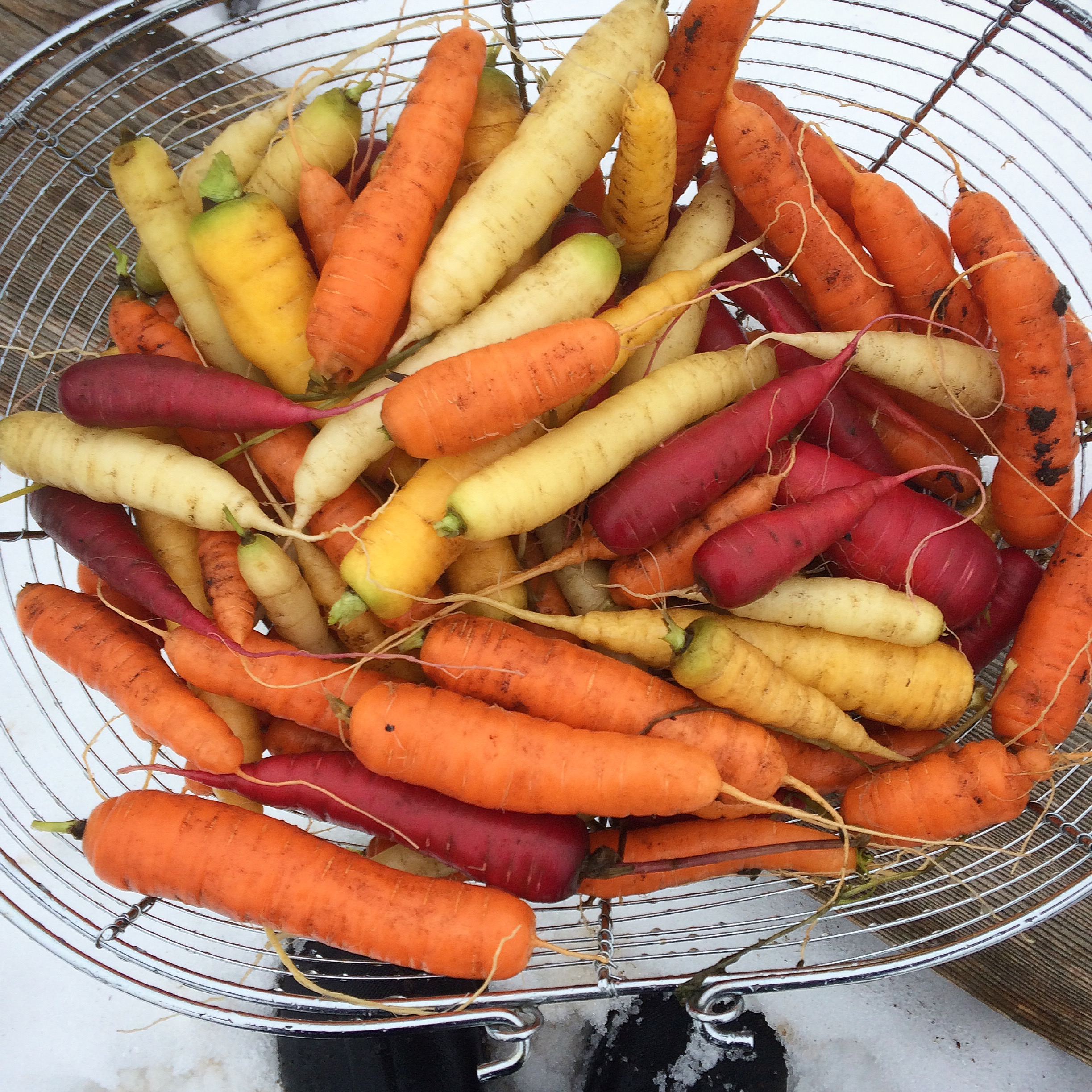 Starburst carrots dug in winter from the garden