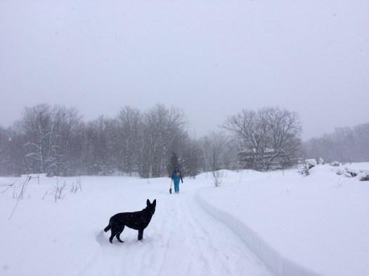 snow rural laneway with dog Bird's nest Garden farm