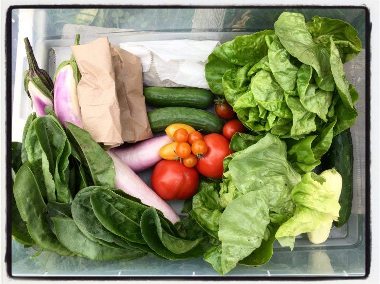 Fresh veggie share from Polka Dot Hen Produce